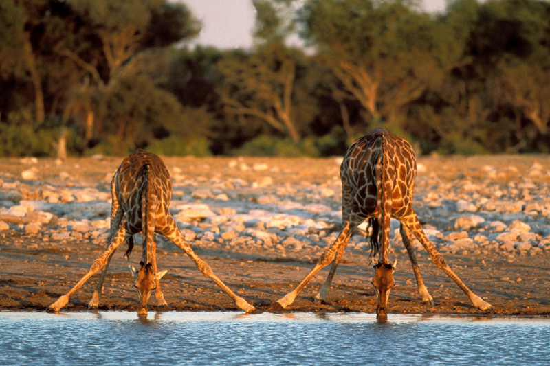 Екскурзия Намибия – Зимбабве – Южна Африка